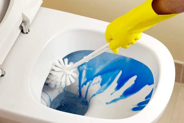 Clean the interior of the toilet bowl